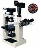 倒置生物显微镜XSP-18CE|生物显微镜价格-上海绘统光学厂