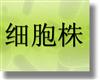 蓖麻蚕卵细胞